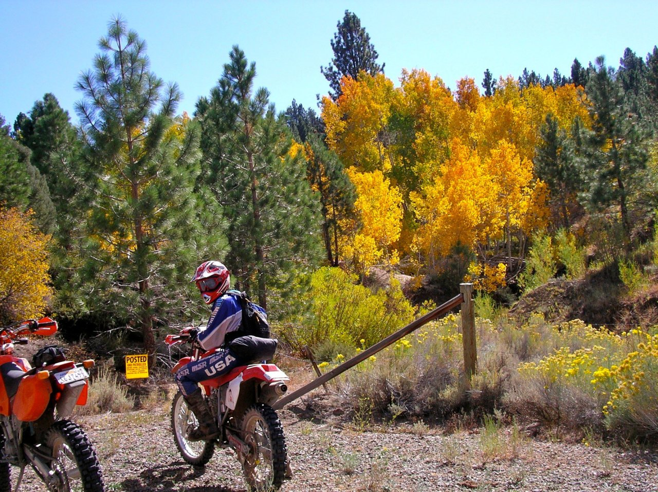 topaz fall trees