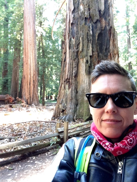 That's a Redwood trunk behind me.  Bigger than most, I'd say.