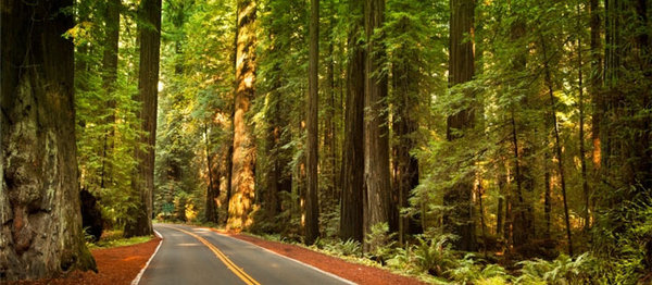 Photo courtesy of Redwood State Park